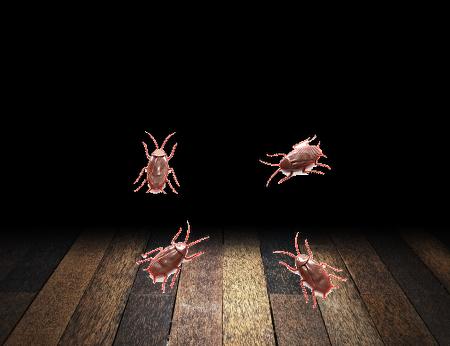 ゴキブリは暗くなると活発に活動を始める