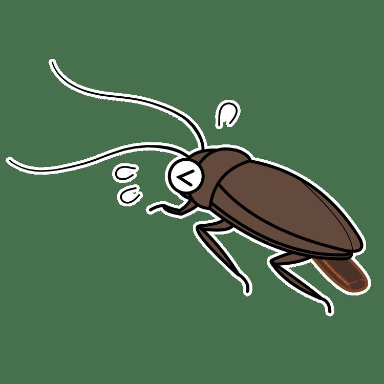 卵を産み落とすゴキブリ