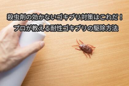 殺虫剤の効かないゴキブリ対策はこれだ!プロが教える耐性ゴキブリの駆除方法