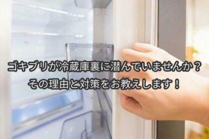 ゴキブリが冷蔵庫裏に潜んでいませんか?その理由と対策をお教えします!