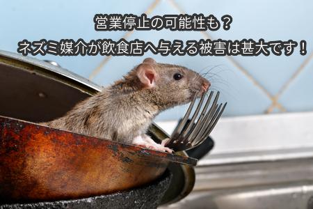 営業停止の可能性も?ネズミ媒介が飲食店へ与える被害は甚大です!