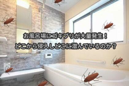お風呂場にゴキブリが大量発生!どこから侵入しどこに潜んでいるのか?