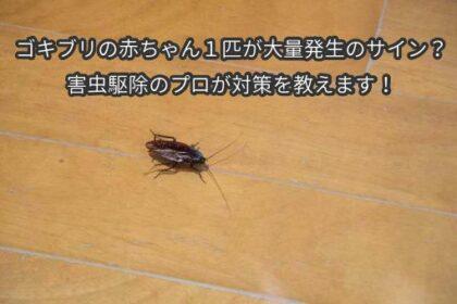 ゴキブリの赤ちゃん1匹が大量発生のサイン?害虫駆除のプロが対策を教えます!