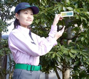 藤沢市の庭木のお手入れはダスキントータルグリーン
