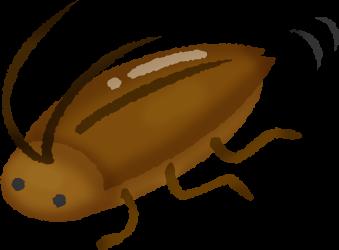 ゴキブリの行動特性