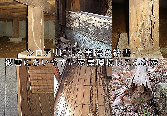 シロアリ被害・被害にあいやすい家屋