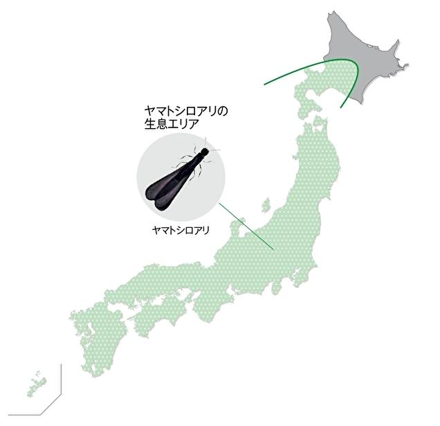ヤマトシロアリの分布