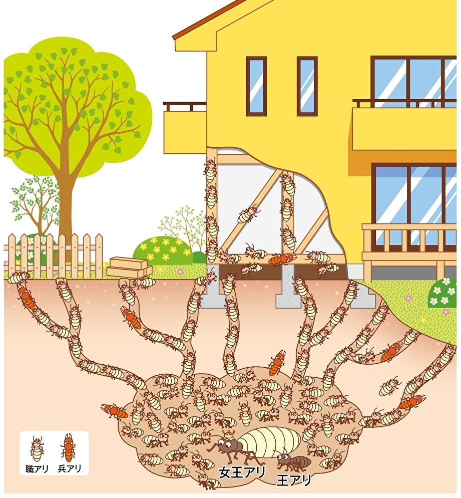 職アリが被害を広げる