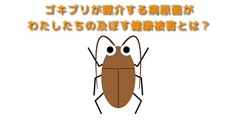 ゴキブリが媒介する病原菌がわたしたちの及ぼす健康被害とは?