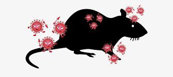 変異株をネズミが媒介