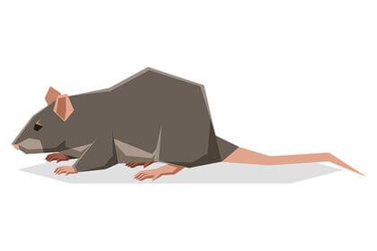 ネズミのフン(ラットサン)を見つけたときの対策