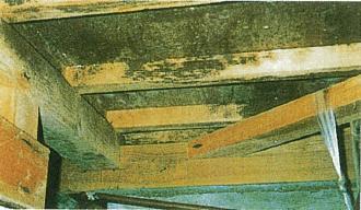木材腐朽菌による被害1