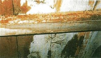木材腐朽菌による被害2