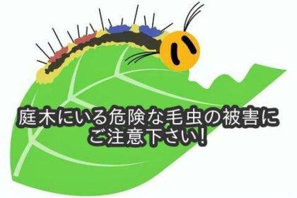 庭木にいる危険な毛虫の被害にご注意下さい!